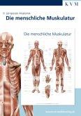 Die menschliche Muskulatur, 1 Poster