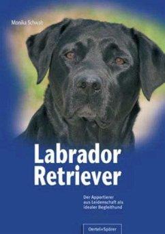 Labrador Retriever - Schwab, Monika