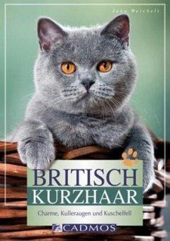 Britisch Kurzhaar - Weichelt, Jana