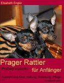 Prager Rattler (Prazský krysarík) für Anfänger
