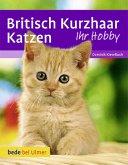 Britisch Kurzhaar Katzen