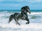 Black Horse (Puzzle)