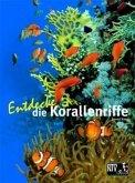 Entdecke die Korallenriffe