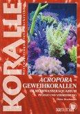 Art für Art 15. Acropora-Geweihkorallen