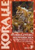 Art für Art 14. Florida-Zwergseepferdchen