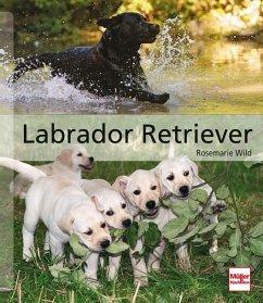 Labrador Retriever - Wild, Rosemarie