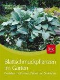 Blattschmuckpflanzen im Garten