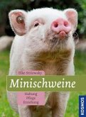 Minischweine
