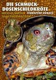 Schmuckdosenschildkröten