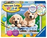 Ravensburger 27839 - Malen nach Zahlen, Süße Hundewelpen