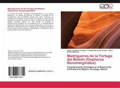 Madrigueras de la Tortuga del Bolsón (Gopherus flavomarginatus)