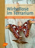 Wirbellose im Terrarium