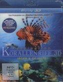 Faszination Korallenriff - Jäger & Gejagte (Blu-ray 3D)