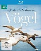 Die fantastische Reise der Vögel (2 Discs)