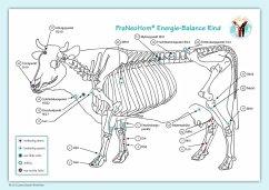 Akupunktur-Tafel Rind/Kuh - Bassols Rheinfelder, Layena