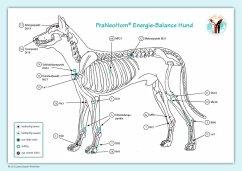 Akupunktur-Tafel Hund - Bassols Rheinfelder, Layena