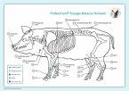 Akupunktur-Tafel Schwein