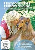 Harmonisches Hundetraining