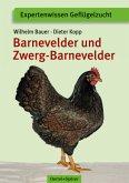 Barnevelder und Zwerg-Barnevelder