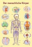 Mein Lernposter: Der menschliche Körper