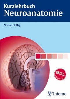 Kurzlehrbuch Neuroanatomie (eBook, PDF) - Ulfig, Norbert