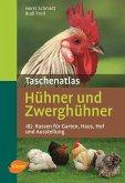 Taschenatlas Hühner und Zwerghühner (eBook, ePUB)