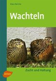 Wachteln (eBook, ePUB)