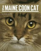 Maine Coon Cat PB