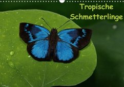 Tropische Schmetterlinge (Wandkalender immerwährend DIN A3 quer) - Dummermuth, Stefan
