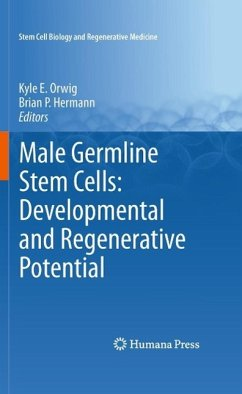 Male Germline Stem Cells: Developmental and Regenerative Potential (eBook, PDF)
