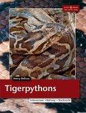 Tigerpython