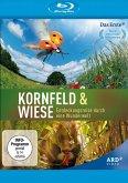 Kornfeld und Wiese - Entdeckungsreise durch eine Wunderwelt