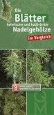 Die Blätter heimischer und kultivierter Nadelgehölze im Vergleich