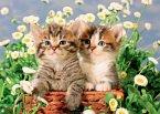 Süße Kätzchen (Puzzle)