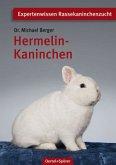 Hermelin-Kaninchen