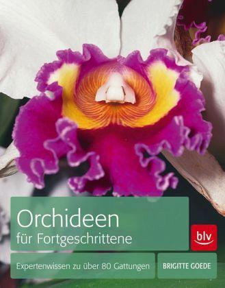 orchideen f r fortgeschrittene von brigitte goede buch. Black Bedroom Furniture Sets. Home Design Ideas