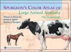 color atlas of small animal anatomy pdf