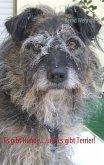Es gibt Hunde....und es gibt Terrier! (eBook, ePUB)