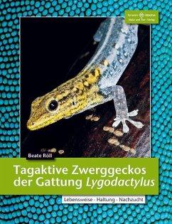 Tagaktive Zweggeckos der Gattung Lygodactylus - Röll, Beate