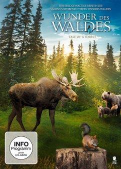 Wunder des Waldes - Tale of a forest