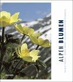 Alpen Blumen