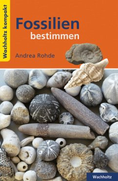 Fossilien bestimmen KOMPAKT - Rohde, Andrea