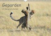 Geparden - Afrikas grazile Katzen (Wandkalender immerwährend DIN A4 quer)
