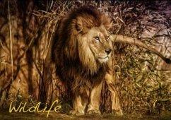 Wildlife (Posterbuch DIN A4 quer)