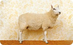 Brotzeitbrettchen Schickes Schaf