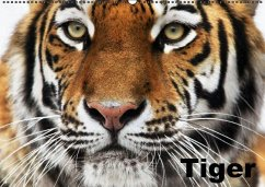 Tiger (Wandkalender immerwährend DIN A2 quer) - Stanzer, Elisabeth