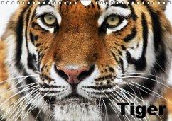 Tiger (Wandkalender immerwährend DIN A4 quer) - Stanzer, Elisabeth