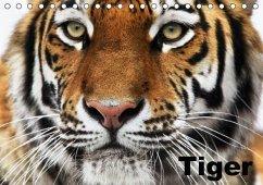 Tiger (Tischkalender immerwährend DIN A5 quer) - Stanzer, Elisabeth