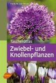 Taschenatlas Zwiebel- und Knollenpflanzen (eBook, PDF)