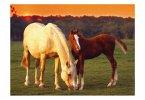 Ravensburger Puzzle Schöne Pferde
